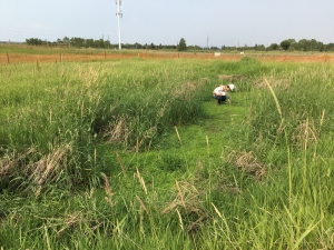 Vegetation assessment on WCRR